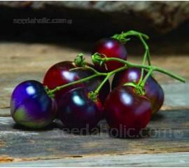 Tomato 'Indigo Blue Berries'