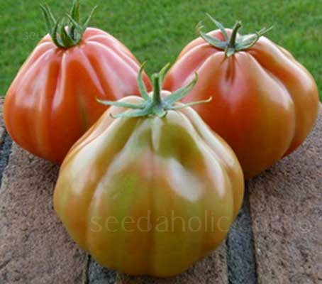Tomato 'F1 Albenga' is a hybrid tomato variety, a type of tomato that is grown in both France and Italy.