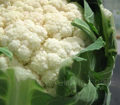 """Cauliflower """"All Year Round"""" (Collection)"""