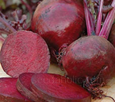 Beetroot 'Bona' is a mid to late season variety that produces fabulous smooth, round roots with a dark skin and intense red flesh.