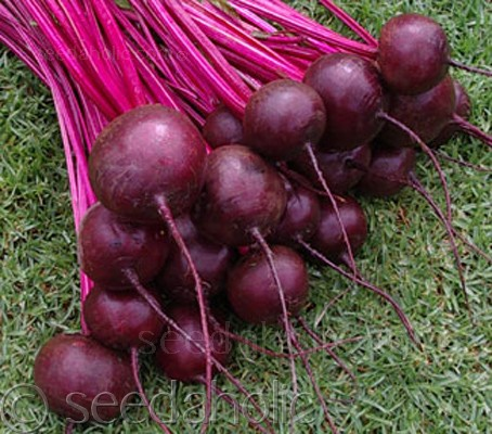 "Beetroot ""Storuman"" Organic (Collection)"