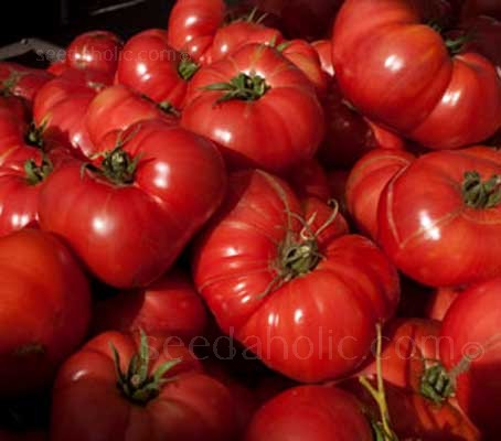'Brandywine' tomatoes are one of the most highly touted varieties grown worldwide and few tomatoes can rival the Brandywine family for popularity.