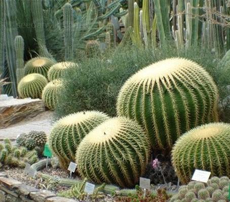 Cactus 'Mixed Desert Species'