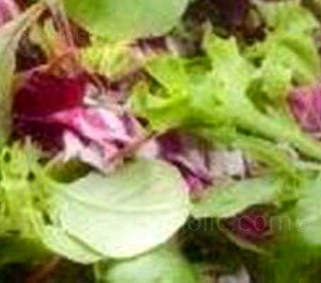 "Baby Leaf Salad Mix - ""Californian Mix"" (Collection)"