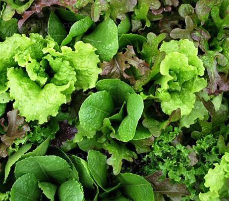 "Baby Leaf Salad Mix - ""Mesclun Mix"" (Collection)"