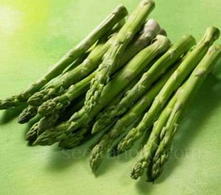 Asparagus 'Connover's Colossal' is a traditional cultivar with good yields from selected crowns.