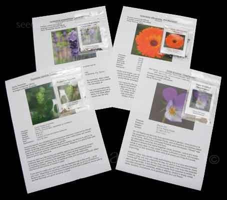 Four packs of plants used in herbal remedies