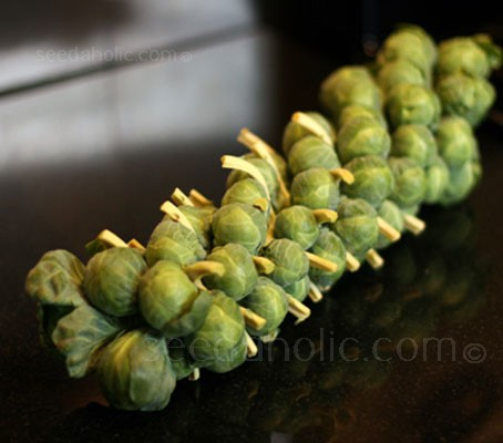 Brussels Sprout Groninger is a second early variety noted for its great tasting sprouts.