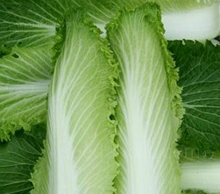 'Michihili' is a softer, loose leaf form of Chinese Cabbage.