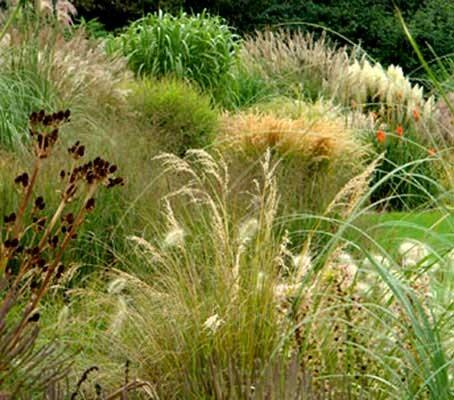 Annual Ornamental Grasses Mix