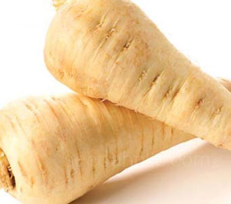 Parsnip 'White Gem' (Collection)