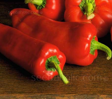 "Sweet Pepper ""Marconi Red"" grow to around 16cm (7in) long and up to 6cm (2½in) in diameter at the shoulder"