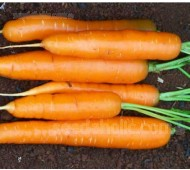 Carrot 'Amsterdam Forcing 2' Organic