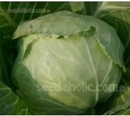 Cabbage 'Marner Large White' Organic