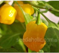 Pepper, Chili Pepper 'Trinidad Perfume', Organic