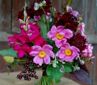 Growing to a height of around 30cm (12in) the Dwarf Cut Flower mix give instant impact and a definite wow factor.