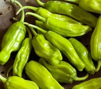 Chili Pepper 'Pepperoncini'