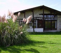 This unusual pink form of pampas grass looks wonderful set in the middle of a lawn.
