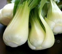 Canton or Dwarf Bok Choy is short and squat and often known as Baby or Squat Pak Choi