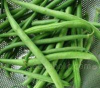 Cobra is one of the most reliable French beans around. The stringless pods grow up to 20cm long.