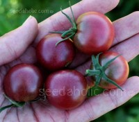Black Cherry is a lovely jewel of a tomato, still fairly rare, they are the only truly black cherry tomato available.