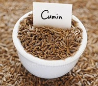 The seeds are oblong and longitudinally ridged, they have a rich aroma and high oil content that helps to add an earthy and warming feeling to recipes.