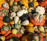 Gourds are one of Mother Nature's strangest plant creations.