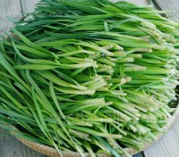 The plant has a distinctive growth habit with strap-shaped leaves unlike either onion or garlic.