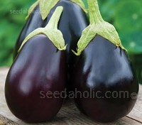 Aubergine Moneymaker F1 is an excellent choice for milder climates. An early-cropping variety that doesn't need Mediterranean heat.