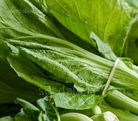 Mustard Gai Choy is a heading form of mustard. This cultivar goes by a number of names throughout Asia, but is most often known as 'Sher-Li-Hon'.