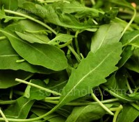 'Olive Leaf' is an excellent selection of the traditional Italian olive leaf wild rocket.