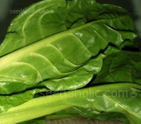 Leaf Beet, Perpetual Spinach, Erbette, Organic