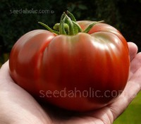Paul Robeson is a gorgeous tomato with beautiful dark mahogany colouring, dark-green shoulders and dense red flesh.