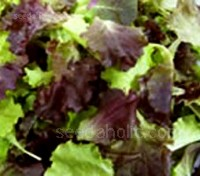 The vivacious colours along with its well loved taste, makes the Provence Salad mix wonderfully enticing.