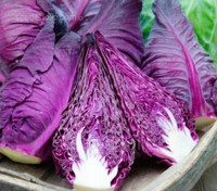 Cabbage 'Kalibos' is a pointed cabbage variety with distinctive red leaves.