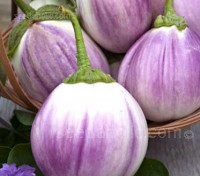 Aubergine 'Rosa Bianca' is a gorgeous variety with a delicate, mild flavour, creamy consistency.