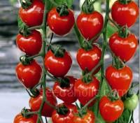 Tomato 'F1 Tomatoberry Garden'