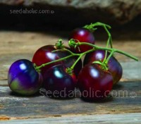 'Indigo Blue Berries' produce trusses of the delightfully delectable little, 12 to 16 grams (1 to 2oz), cherry sized tomatoes.
