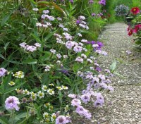 This jewel-like perennial is an all round tough plant suitable for problem areas