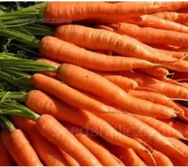 Carrot 'Autumn King'