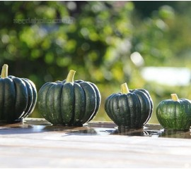 Squash 'Futtsu Black Early'