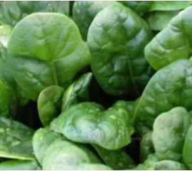 Spinach 'F1 Banjo'