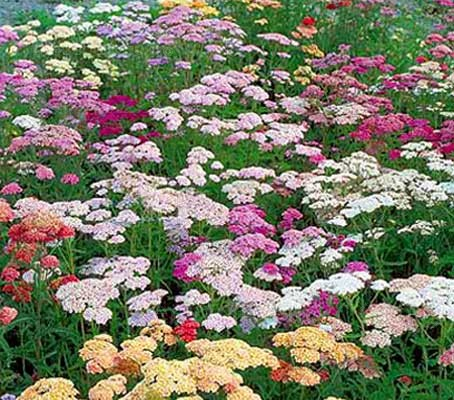 With a soft mix of pastel coloured flowers 'Summer Pastels' flowers in abundance from spring to first frosts.