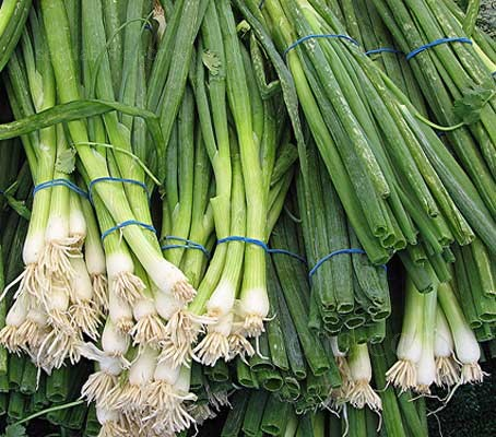Bunching onion Kyoto Market has a mild, sweet flavour and is strongly reminiscent to the scallion or welsh onion.