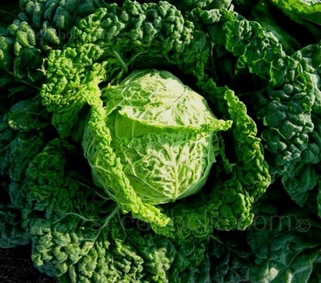 Cabbage 'Ormskirk' produces deep blue-green outer crinkly leaves and a pale green centre.