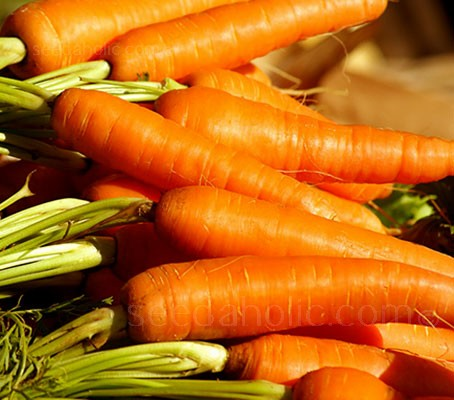 Carrot Rothild is a high yielding quality Autumn King type with very good flavour and intense red colour.