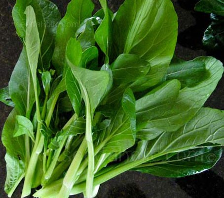 Broccoli Kailan 'Kichi' - Collection