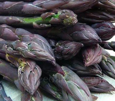 Crimson Pacific is considered to be one of the highest yielding purple types available and up to 50% sweeter than green asparagus.