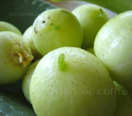 Cucumber 'Lemon Cucumber'