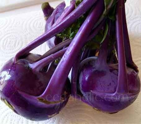 Kohl Rabi 'Delicacy Purple'